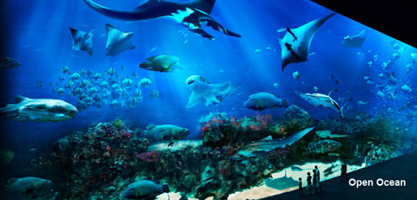 RWS S.E.A. Aquarium